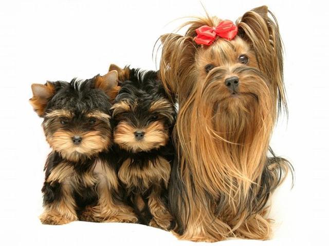Схема вакцинации собак:
